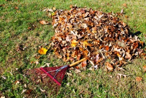 raking-leaves
