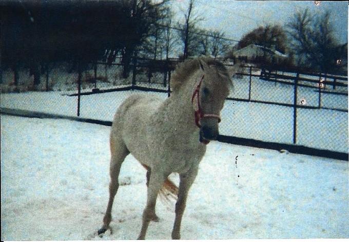 Snowman 1988